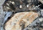 haava-marmormadanik
