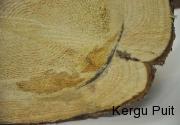 kinnine-molu