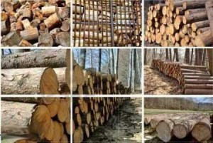 Metsamaterjali müük